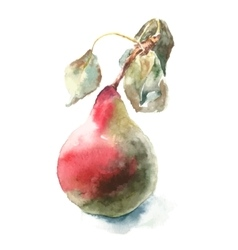 Watercolor pear vector image