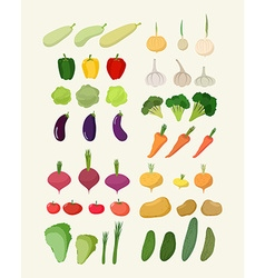 Set of fresh vegetables Isolated carrot and vector image
