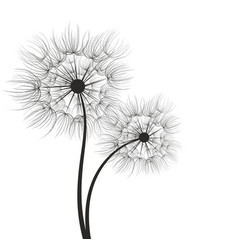 A dandelion flower vector