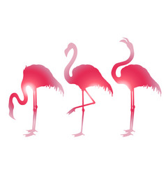Cute graphic flamingo vector