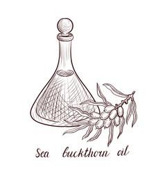 drawing sea buckthorn oil vector image