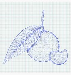 mandarin orange with segment blue hand drawn vector image