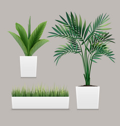 plants potted vector image
