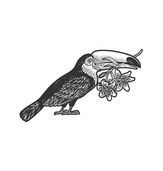toucan and lilies sketch vector image