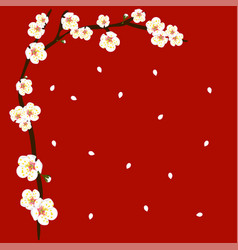 white plum blossom flower border on red background vector image