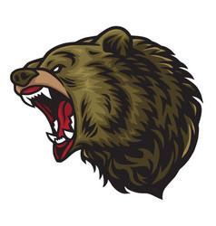angry bear roaring logo mascot vector image