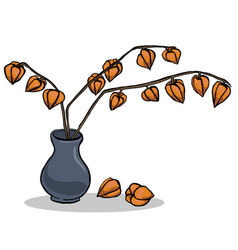 Autumn with inflorescence physalis vector