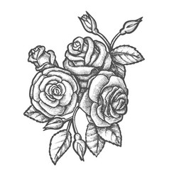 bouquet rose flowers sketch vintage poster vector image