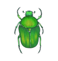 bug bronze hand drawn insect vector image