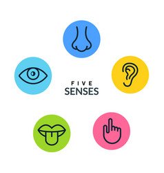five human senses vision eye smell nose hearing vector image