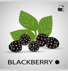 set of five blackberries isolated on a background vector image