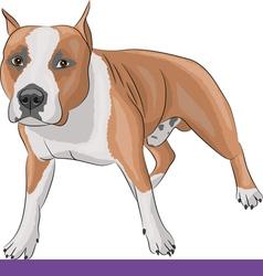 Staffordshire terrier b vector