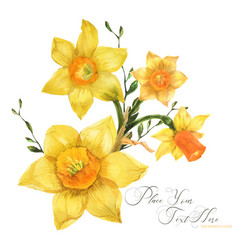 Yellow spring floral bouquet with daffodil flowers vector