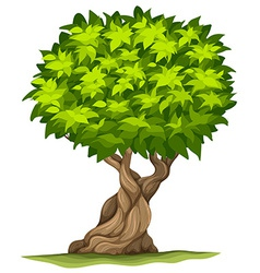 Big old tree vector image