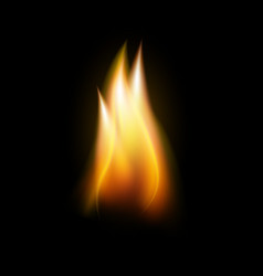 realistic flame tongue element vector image