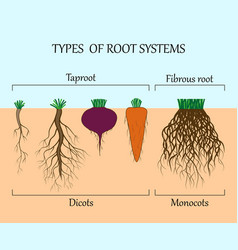 Root system vector