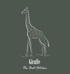 White giraffe silhouette vector