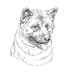 American akita hand drawing portrait vector