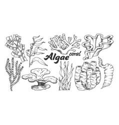 collection algae seaweed coral set vintage vector image