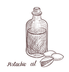 drawing pistachio oil vector image
