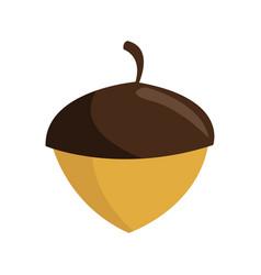 Hazelnut nut icon vector