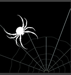 white spider on the black background vector image