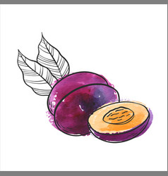 drawing plum vector image