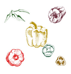 vintage ink hand drawn set of different peppers vector image