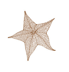 decorative brown line starfish in zentangle style vector image
