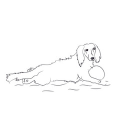dog lies dachshund lines vector image
