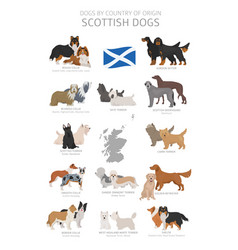 Dogs country origin scottish dog breeds vector