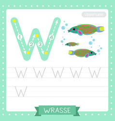 Letter w uppercase tracing practice worksheet of vector