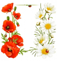 poppy and chamomile vector image