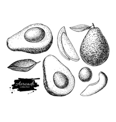 Hand drawn detailed avocado set sketch vector