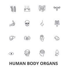 human body organs human body medical human vector image