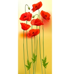 Nature background with red beauty poppies vector