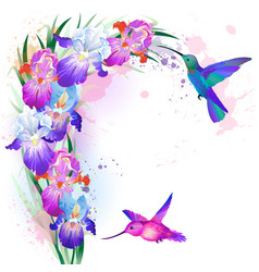 print with iris flowers and hummingbirds vector image