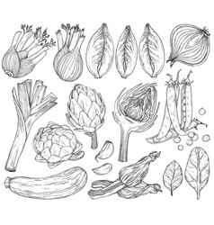 Set nature mediterranean vegetables fresh vector