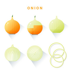 Set of fresh onions isolated on white background vector