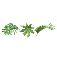 tropic leaves set vector image
