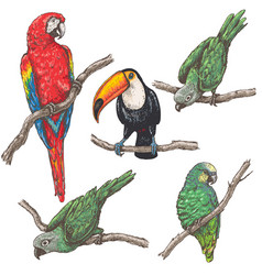 tropical birds sketch vector image