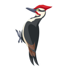 cartoon smiling woodpecker vector image