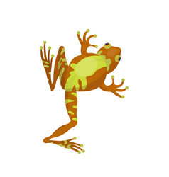 frog cartoon tropical brown animal cartoon nature vector image vector image