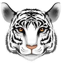 A head of a tiger vector image