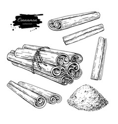Cinnamon stick tied bunch and powder set vector