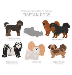 Dogs country origin tibetan dog breeds vector