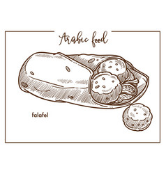 falafel with pita bread from traditional arabic vector image