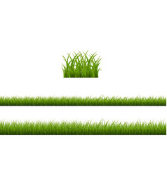 green grass isolated white background vector image