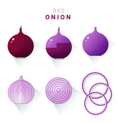 Set of fresh red onions vector