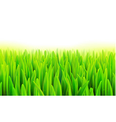 stock realistic macro grass vector image